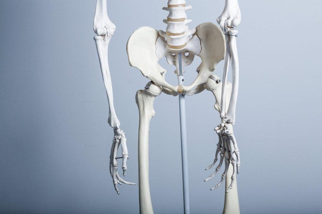 骨盤の画像