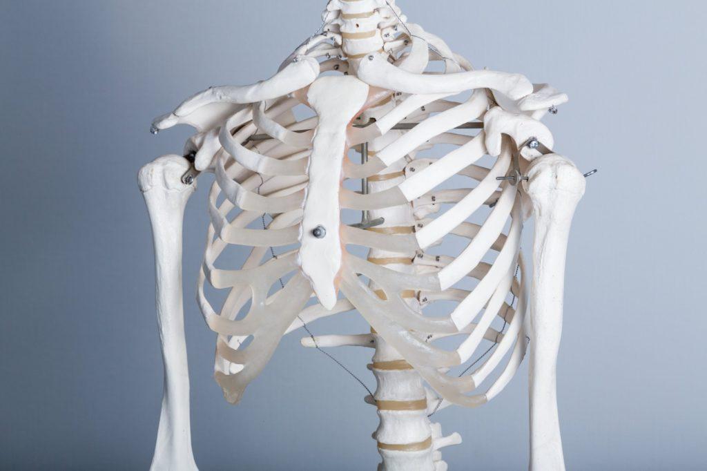 胸郭2の画像