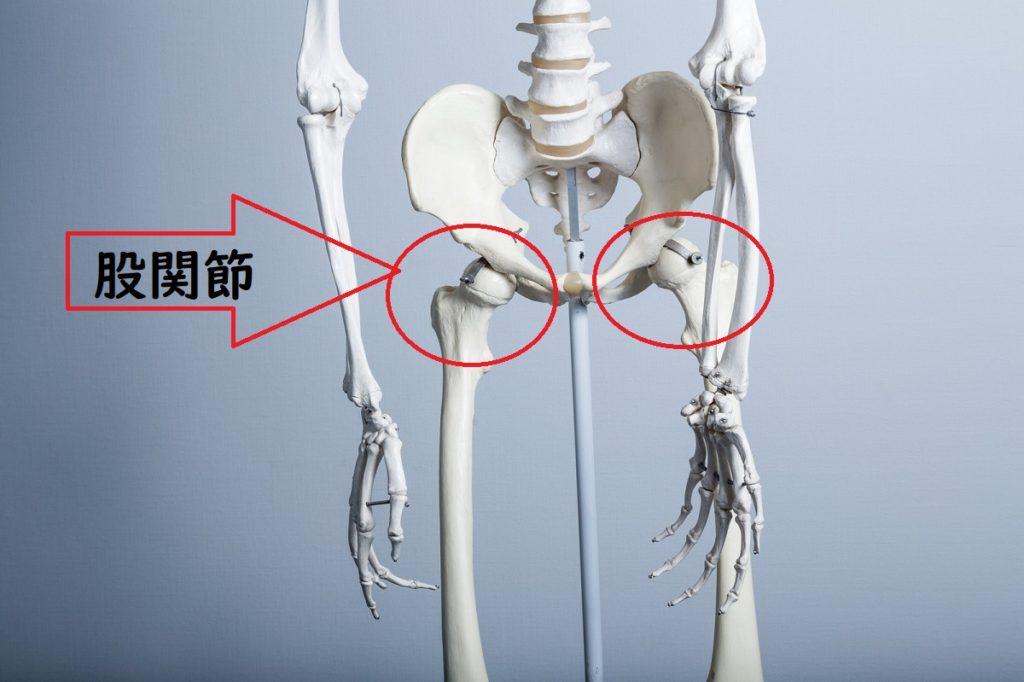 股関節の画像02